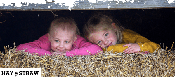 Hay and Straw 599 x 265px