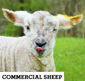 /Commercials